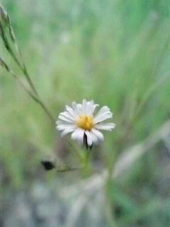906野花