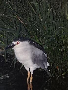 0822鳥